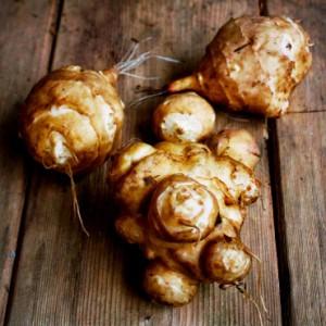 Топинамбур: польза и вред корнеплода